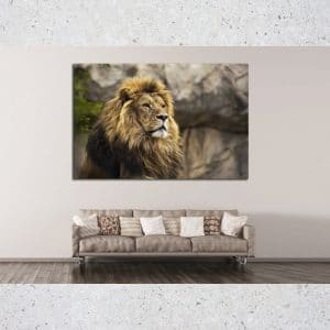 The Hope Of A Lion